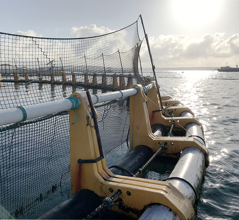 Specialist genetics support to the global aquaculture industry